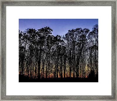 Framed Print featuring the photograph Black Trees by Onyonet  Photo Studios