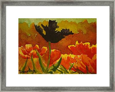 Black Tulip Framed Print