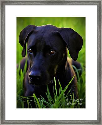 Black Velvet Framed Print
