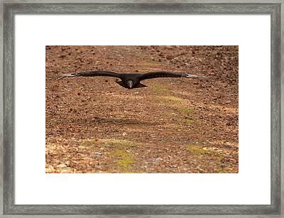 Framed Print featuring the digital art Black Vulture In Flight by Chris Flees
