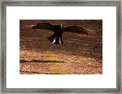 Framed Print featuring the digital art Black Vulture Landing by Chris Flees