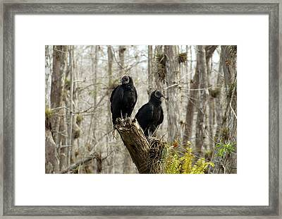 Black Vultures Framed Print by David Lee Thompson