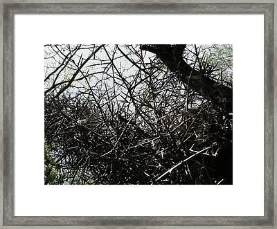 Black Walnut Spikes II Framed Print by Anna Villarreal Garbis