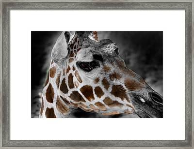Black  White And Color Giraffe Framed Print
