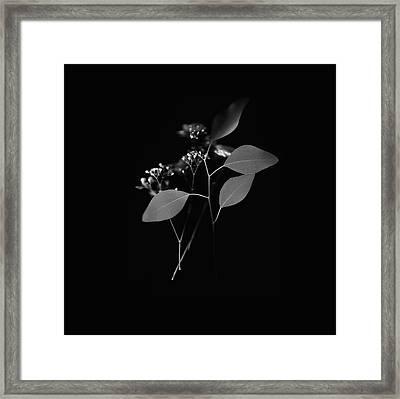 Floating Black And White Framed Print