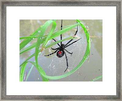 Black Widow Wheel Framed Print by Al Powell Photography USA