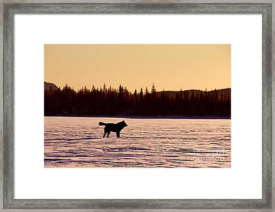 Black Wolf And Sunset Framed Print by John Hyde - Printscapes