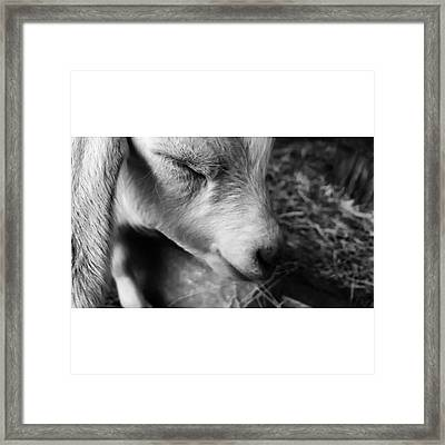 #blackandwhite #bnw #bnw_captures Framed Print by Natalie Anne