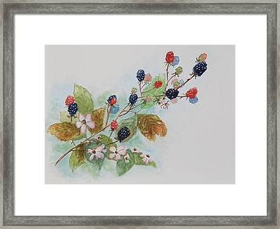 Blackberry Composition Framed Print by Geraldine Leahy