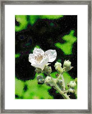 Blackberry Of My Eye Framed Print by Tim Allen