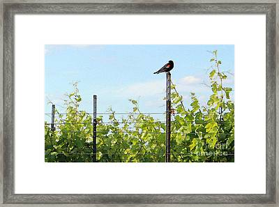 Blackbird Has Spoken Framed Print