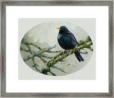 Blackbird Painting Framed Print by Alison Fennell