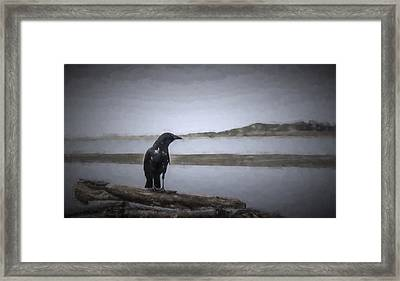 Blackbird Surveys The Bay Framed Print