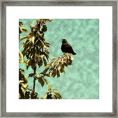 Blackbird's Song Framed Print by Bonnie Bruno
