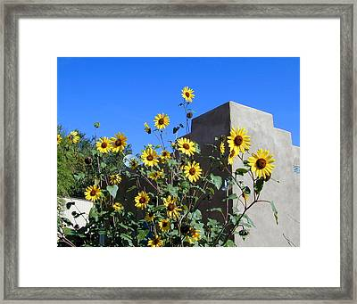 Blackeyed Susans And Adobe Framed Print by Joseph R Luciano