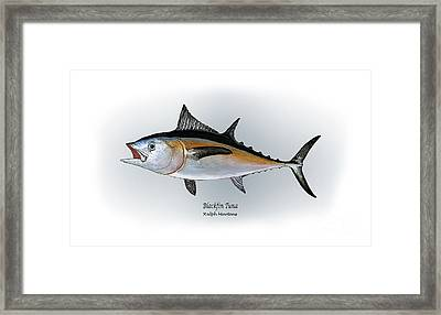 Blackfin Tuna Framed Print by Ralph Martens