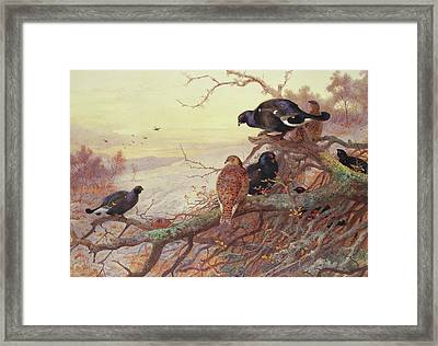 Blackgame In Winter  Framed Print by Archibald Thorburn