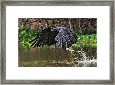 Framed Print featuring the photograph Blackhawk Fishing #1 by Wade Aiken