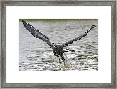 Framed Print featuring the photograph Blackhawk Fishing #2 by Wade Aiken