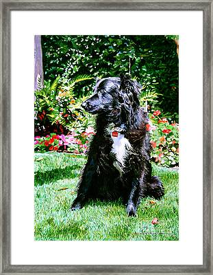 Blackie Framed Print