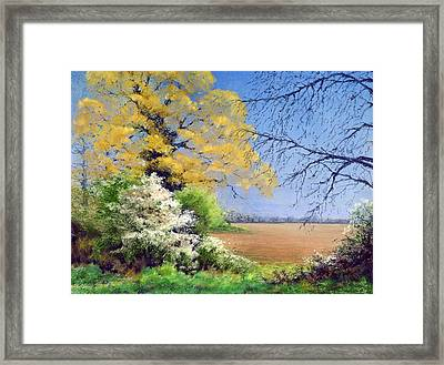 Blackthorn Winter Framed Print by Anthony Rule