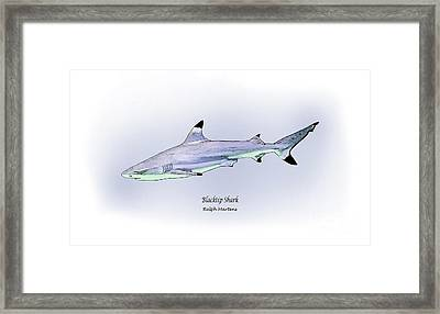 Blacktip Shark Framed Print by Ralph Martens