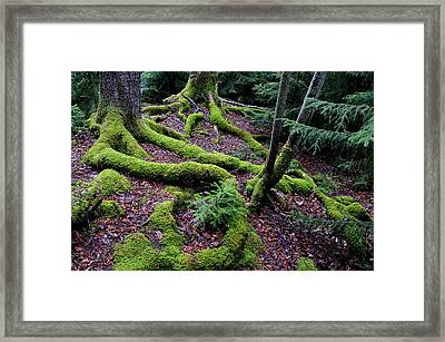 Blackwater Falls State Park Framed Print by Thomas R Fletcher