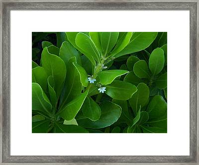 Blackwater Green Framed Print by Charles Peck