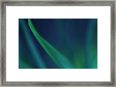 Blade Of Grass  Framed Print by Debbie Oppermann