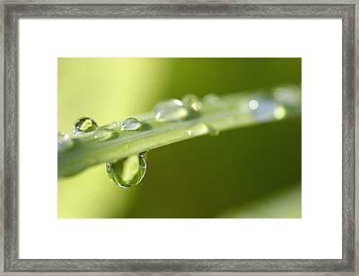Blade Of Grass Framed Print