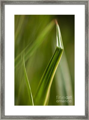 Blades Abstract 3 Framed Print by Mike Reid