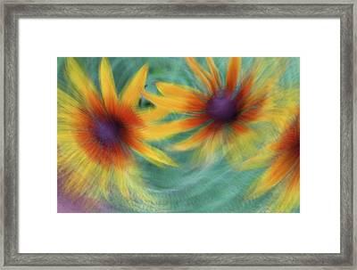Framed Print featuring the photograph Blanket Flower Bingo by Deborah Hughes