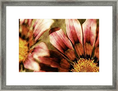 Blanket Flowers Framed Print