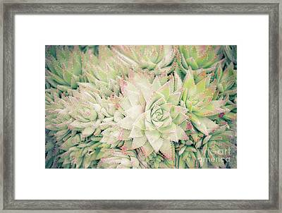 Blanket Of Succulents Framed Print by Ana V Ramirez