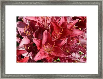 Blast Of Color Framed Print by Kathleen Struckle