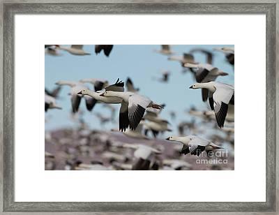 Blast Off In The Socorro Skies  Framed Print by Ruth Jolly