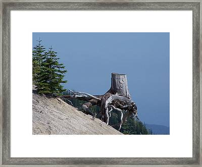 Blasted Stump  Framed Print by Gene Ritchhart