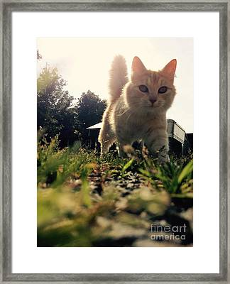 Blaze The Cat Framed Print by Mary Tron