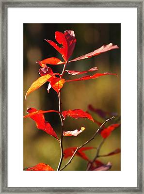 Blazing Fire Framed Print by Lori Mellen-Pagliaro