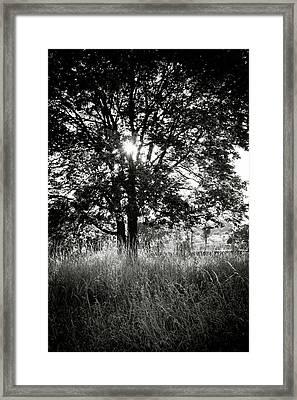 Blazing Tree Framed Print