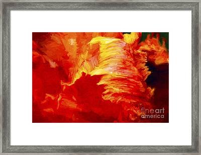 Blazing Tulip Framed Print