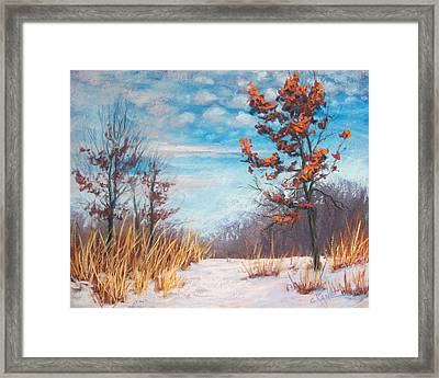 Blazing Winter Grasses Framed Print by Christine Camp