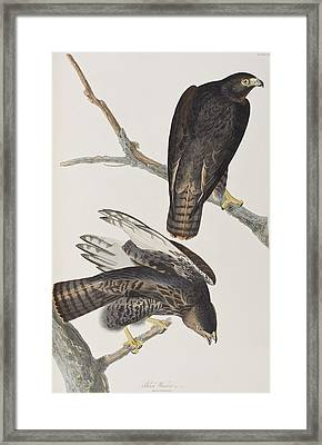 Blck Warrior Framed Print by John James Audubon