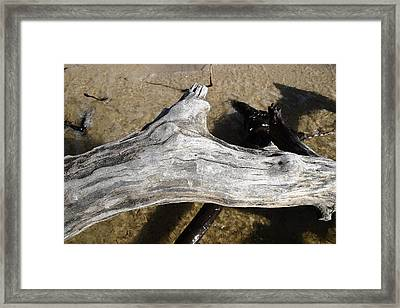 Bleached Driftwood Framed Print by Mary Haber