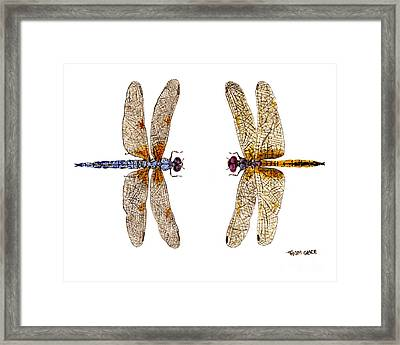 Framed Print featuring the painting Bleached Skimmer And Hyacinth Glider by Thom Glace