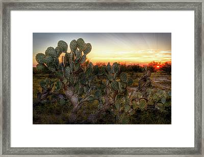 Bleed Out Framed Print by Matt Smith
