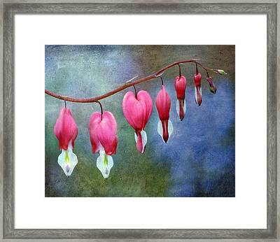 Bleeding Heart 2 Framed Print