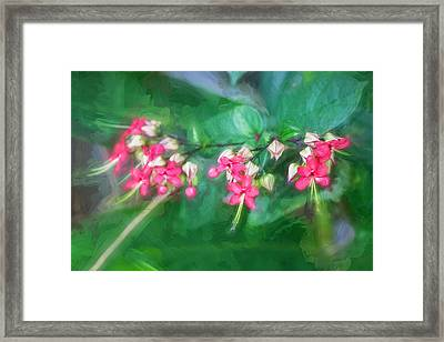 Bleeding Heart Flowers Clerodendrum Painted 5 Framed Print