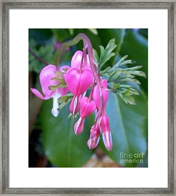 Bleeding Heart Framed Print by Vera Gadman
