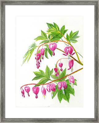 Bleeding Hearts #1 Framed Print by Sharon Freeman